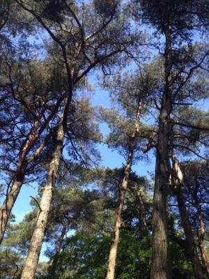 Ziet u even door de bomen het bos niet meer?